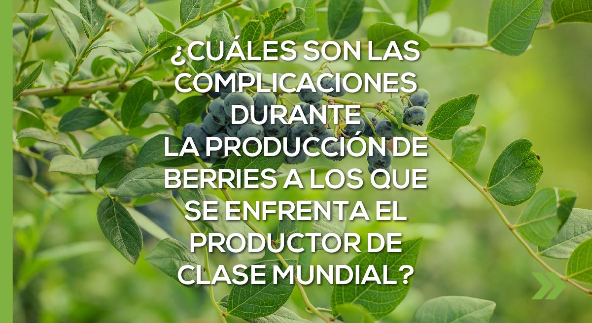 ¿Cuáles son las complicaciones durante la producción de Berries a los que se enfrenta el productor de clase mundial?