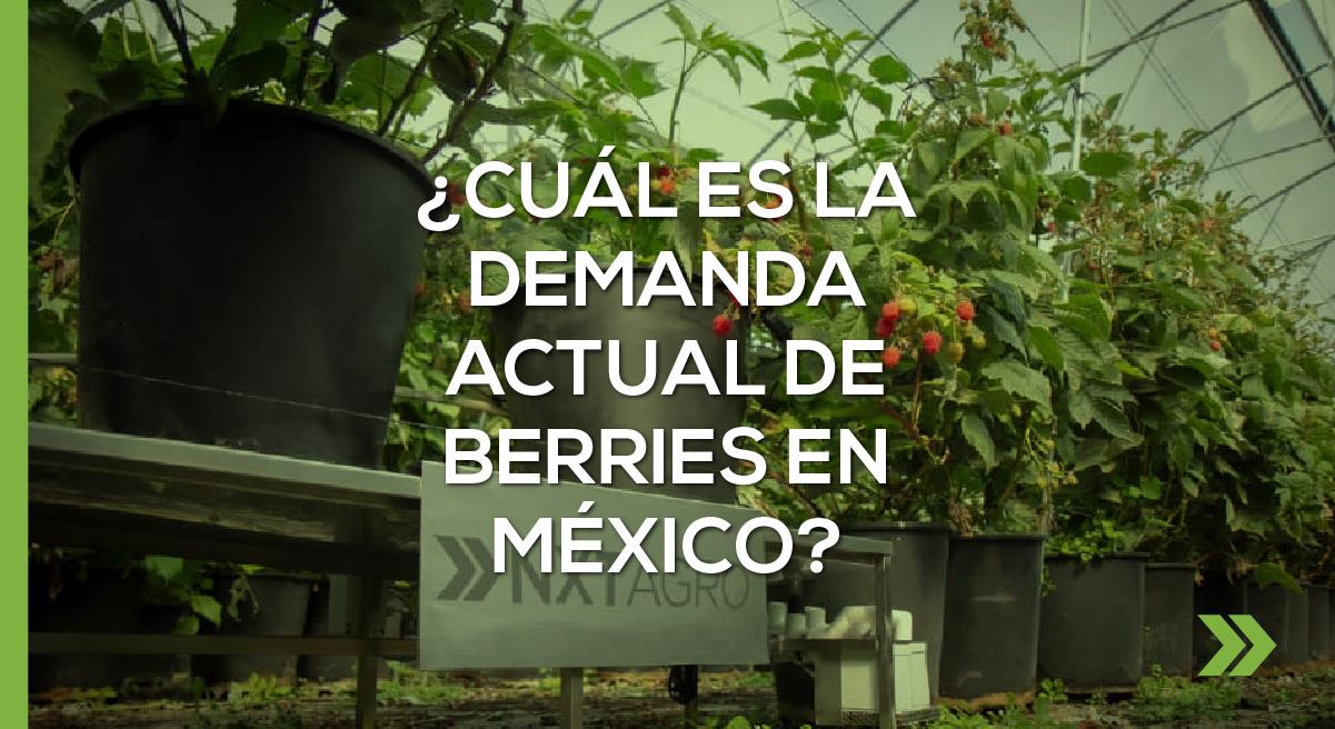¿Cuál es la demanda actual de Berries en México?