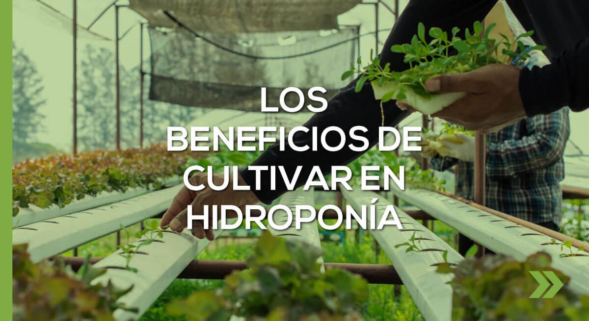 Los beneficios de cultivar en Hidroponía