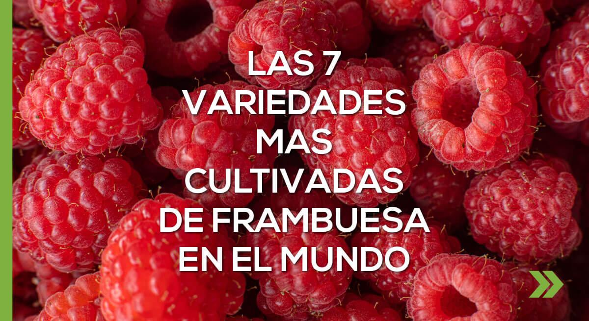 Las 7 variedades mas cultivadas de frambuesa en el mundo
