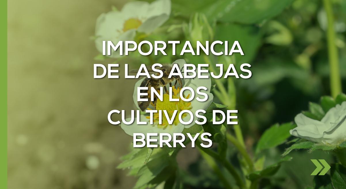 Importancia de las abejas en los cultivos de Berrys