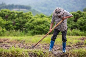 male-farmer-who-is-using-shovel-to-dig-the-soil-in-his-rice-fields-1.jpg